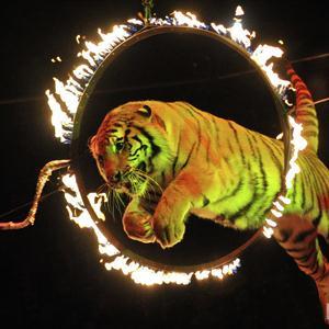Цирки Львовского