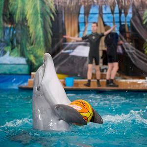 Дельфинарии, океанариумы Львовского