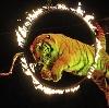 Цирки в Львовском