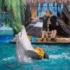 Дельфинарии, океанариумы в Львовском