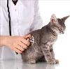 Ветеринарные клиники в Львовском